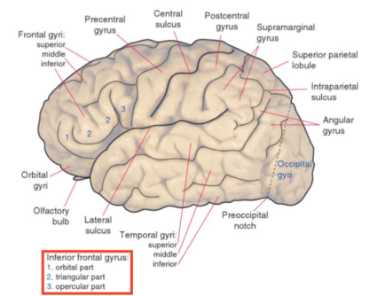 What happens in the brain when you learn something?